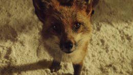 foxweb