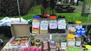 A stall at Go Green Week at Newcastle University Image: RenewCastle