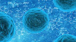 stem-cell-163711_960_7202