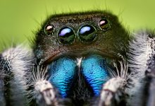 Mythbusters: Do you swallow spiders when you sleep?