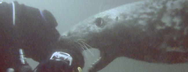 Sub Aqua nibbled by seals in scuba dive