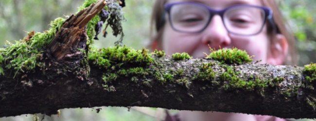 Photobox: Watergate Forest