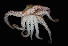 Word of the Week: Cephalopod