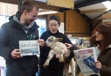 Geoff the (potentially) psychic lamb predicts Stan Calvert result