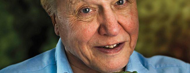 Amazing Attenborough: Will BBC's Dynasties Break Records?