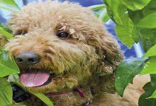 Human-Animal Relationship Awareness Week: Pet Sounds
