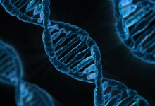 Scientists aim to sequence genomes of all known plants and animals